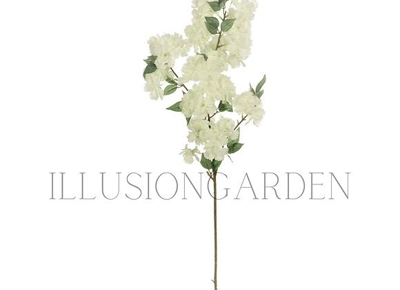 Sakura blanco