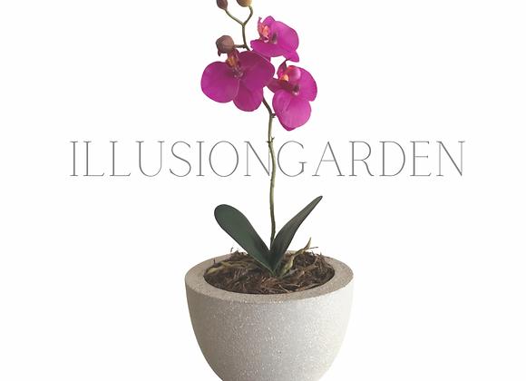 Orquídea purpura pequeña en maceta de cemento. Planta artificial
