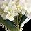 Thumbnail: Hortensias Blancas