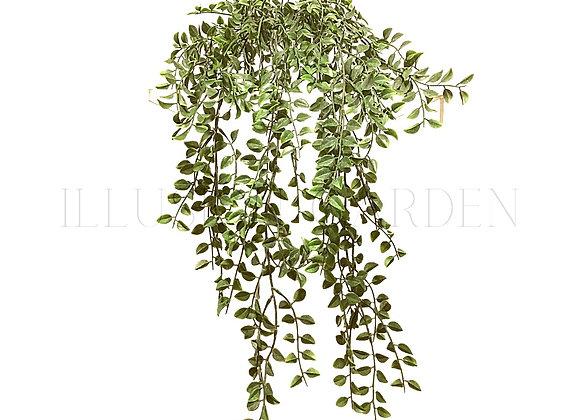 Planta artificial Colgante Boj con maceta blanca 14 x 14