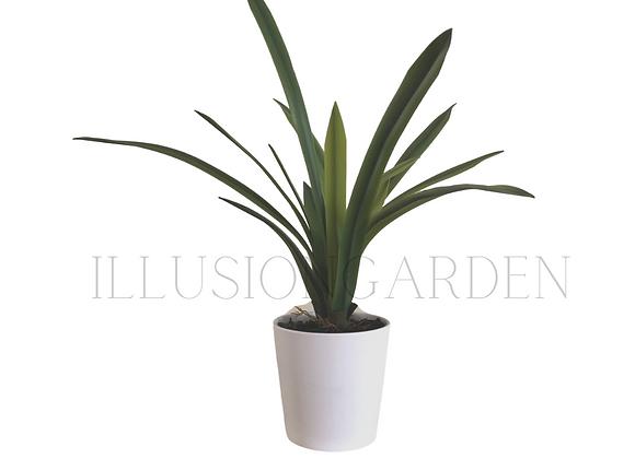 Planta Orquidea Cymbidium con Maceta blanca