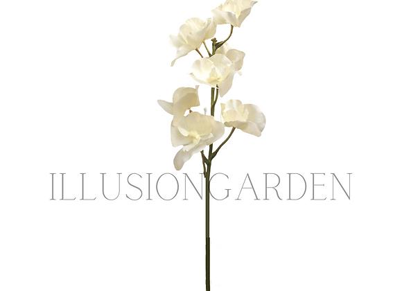 Orquídea Tallo Vanda Crema