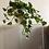 Thumbnail: Planta artificial boa pequeña en maceta blanca. Planta artificial