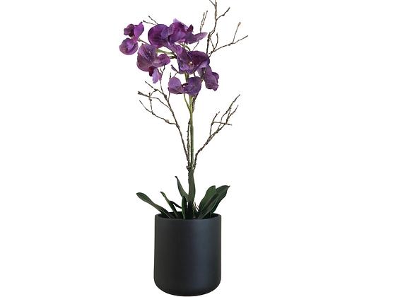 Orquídea Morada en maceta 19X19 negra