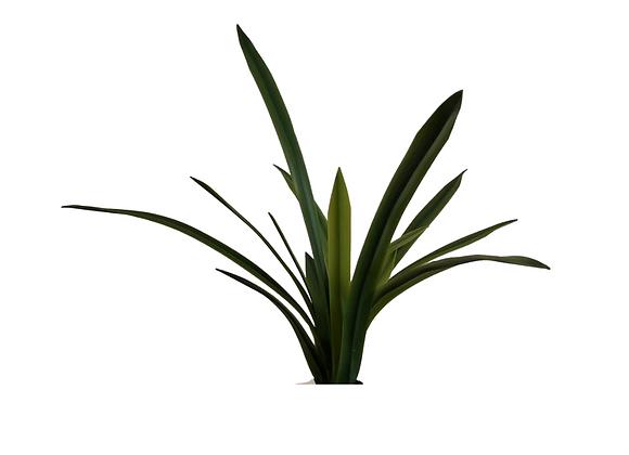 Planta Orquidea Cymbidium