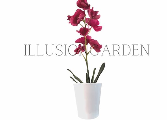 Orquídea Vanda fucsia en maceta blanca