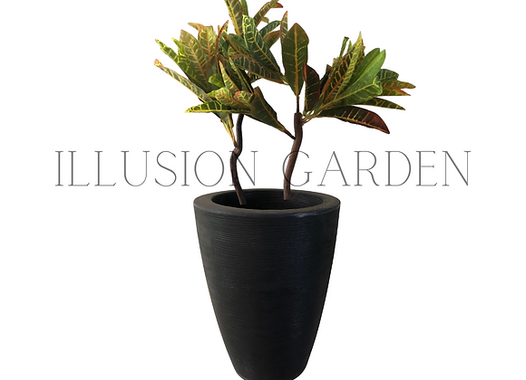 Planta Croto con maceta negra alta