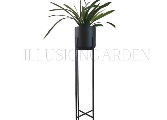 Planta Cymbidium con Maceta Cerámica Negra D 19 cm c/pedestal negro H