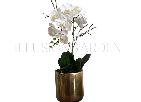 Orquidea blanca large en maceta dorada