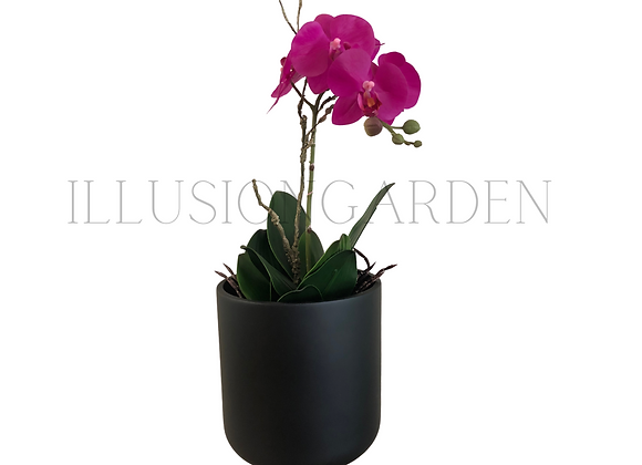 Orquídea fucsia con maceta negra 19x19 cm