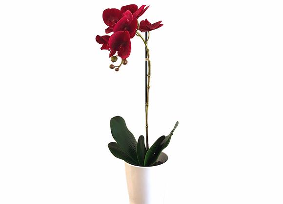 Orquídea roja en maceta blanca