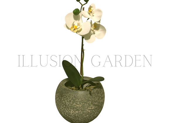 Mini Orquidea Phaloenopsis con maceta cerámica acabado piedra ploma