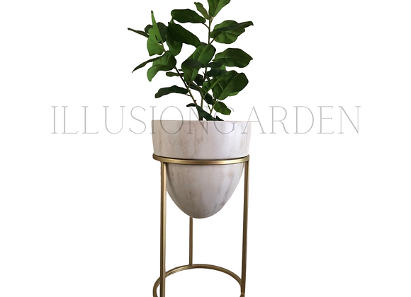 Ficus Lyrata  con Maceta A. Mármol c/pedestal  D 31 cm