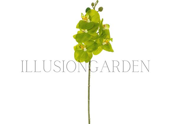 Orquídea Tallo Phaloenopsis verde x 5 flores Tallo