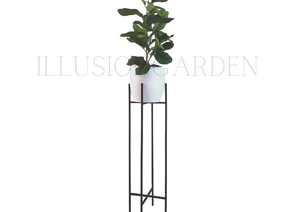 Ficus Lyrata Maceta Cerámica blanca D 19 cm c/pedestal negro H 82 cm