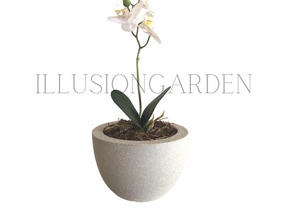 Orquídea a blanca pequeña en maceta de cemento. Planta artificial