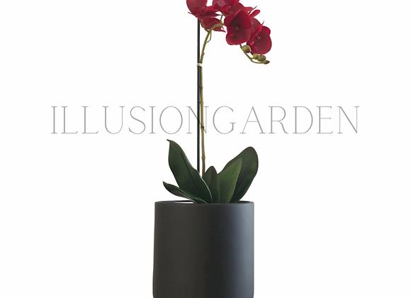 Orquidea roja de 7 flores en maceta negra