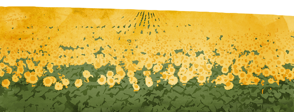 ONLY Sunflowers Field.png