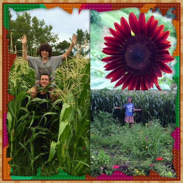 eieio-farms-collage.jpg