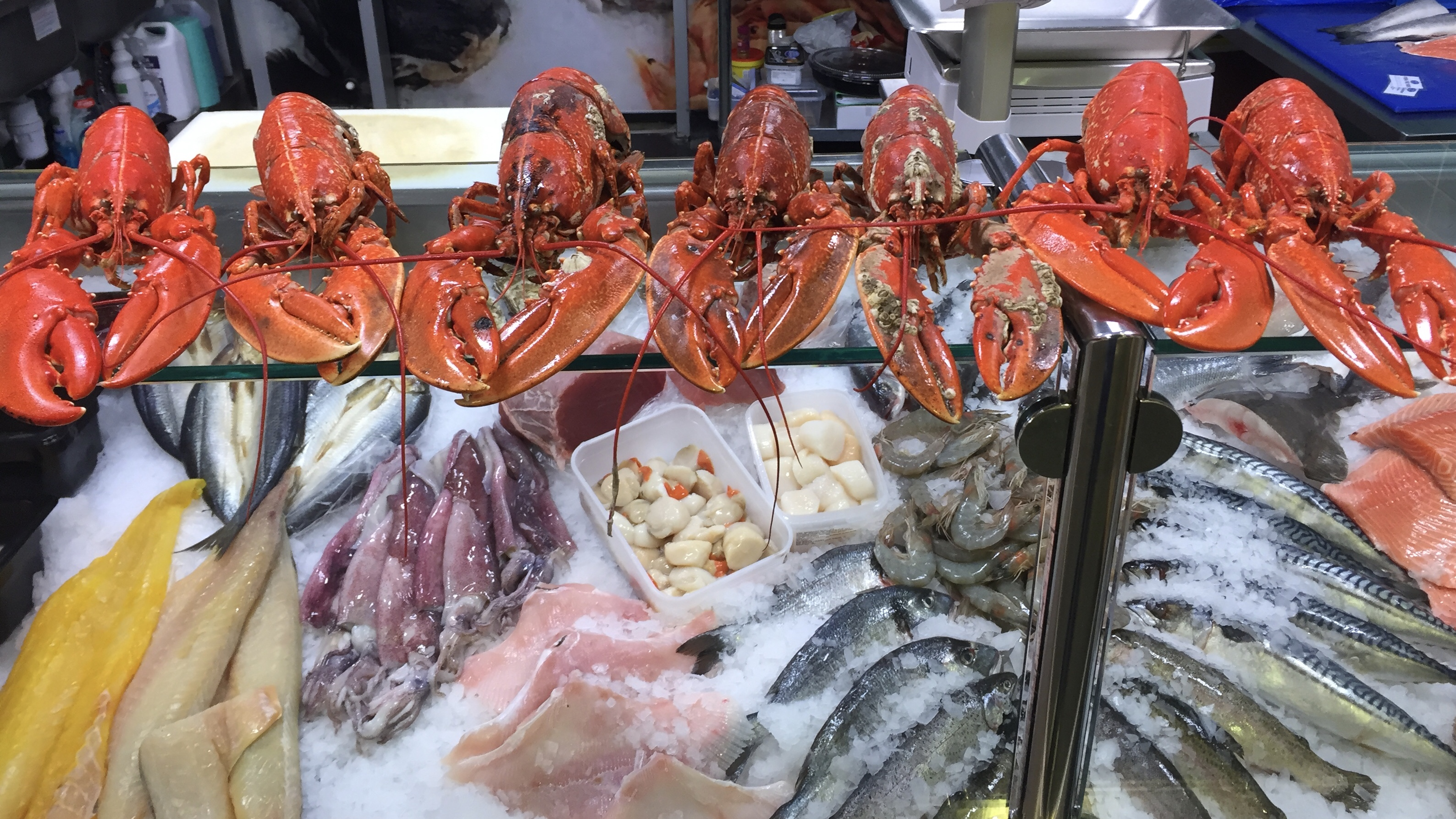 lobster cruilty