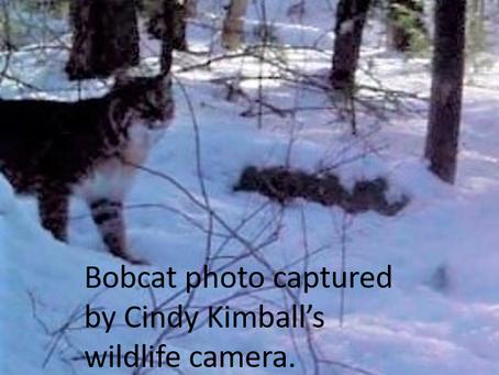 Amateur Animal Tracking Around Keoka Lake