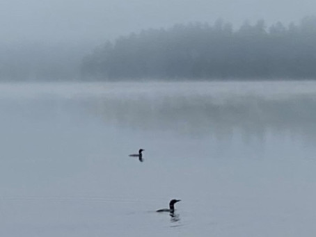The Call of the Loon