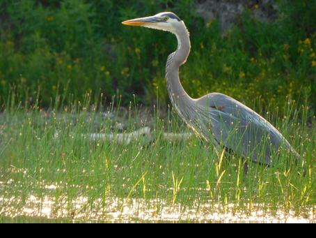 KLA 2021 Photo Contest:  Our Wildlife