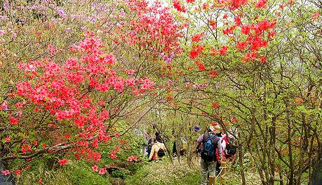 レンゲやつつじが咲き乱れる古峰ヶ原高原