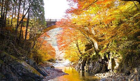 秋は紅葉が美しい大芦川