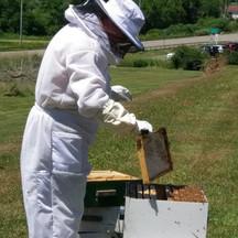 pwh bees.jpg