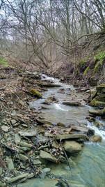 creek 3.jpg