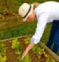 Ann Volkwein - garden lettuce