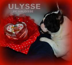 Ulysse De Valoisse