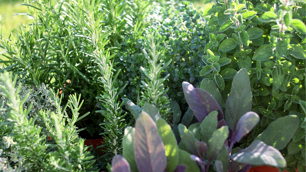 Website herbs design.jpg