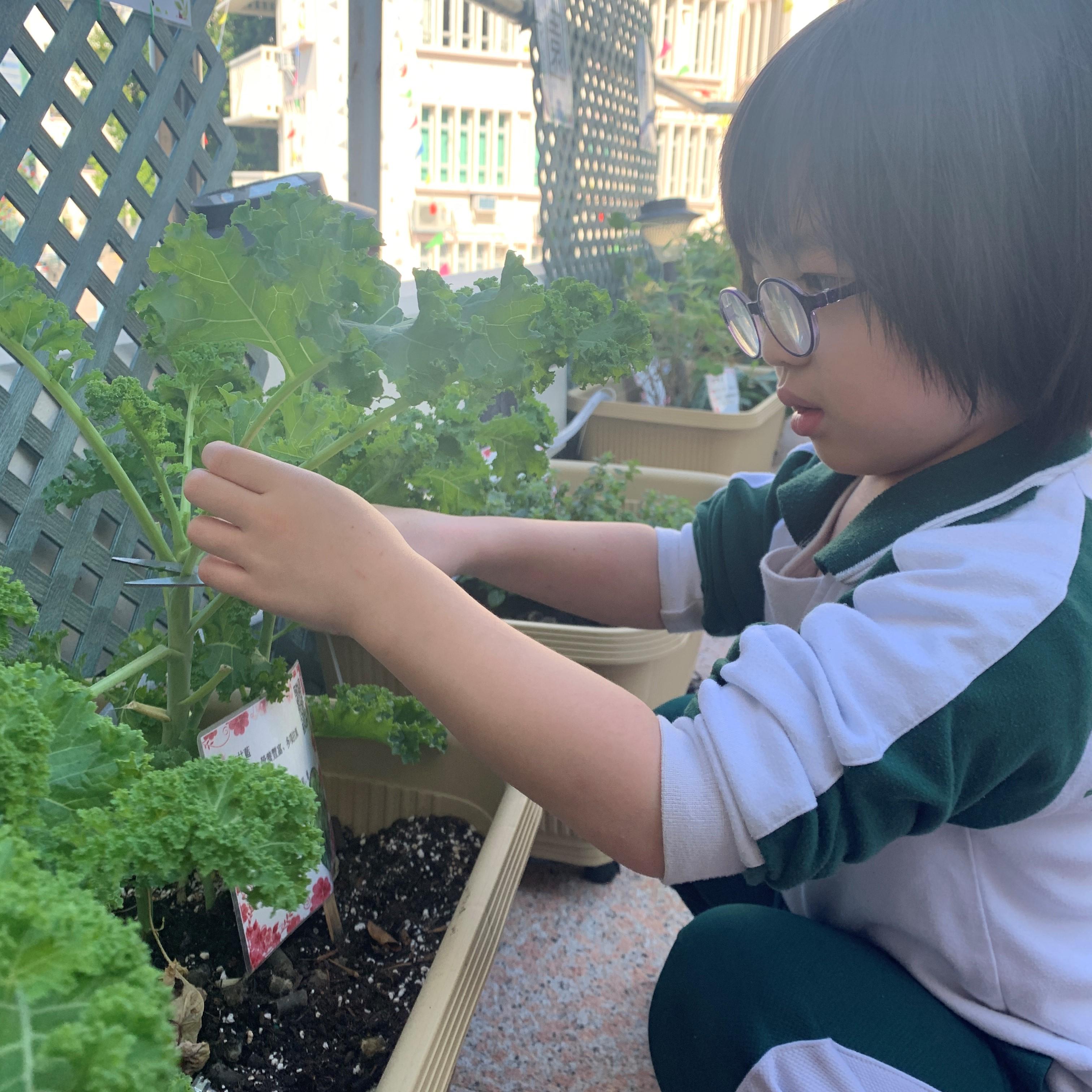 到花園剪菜