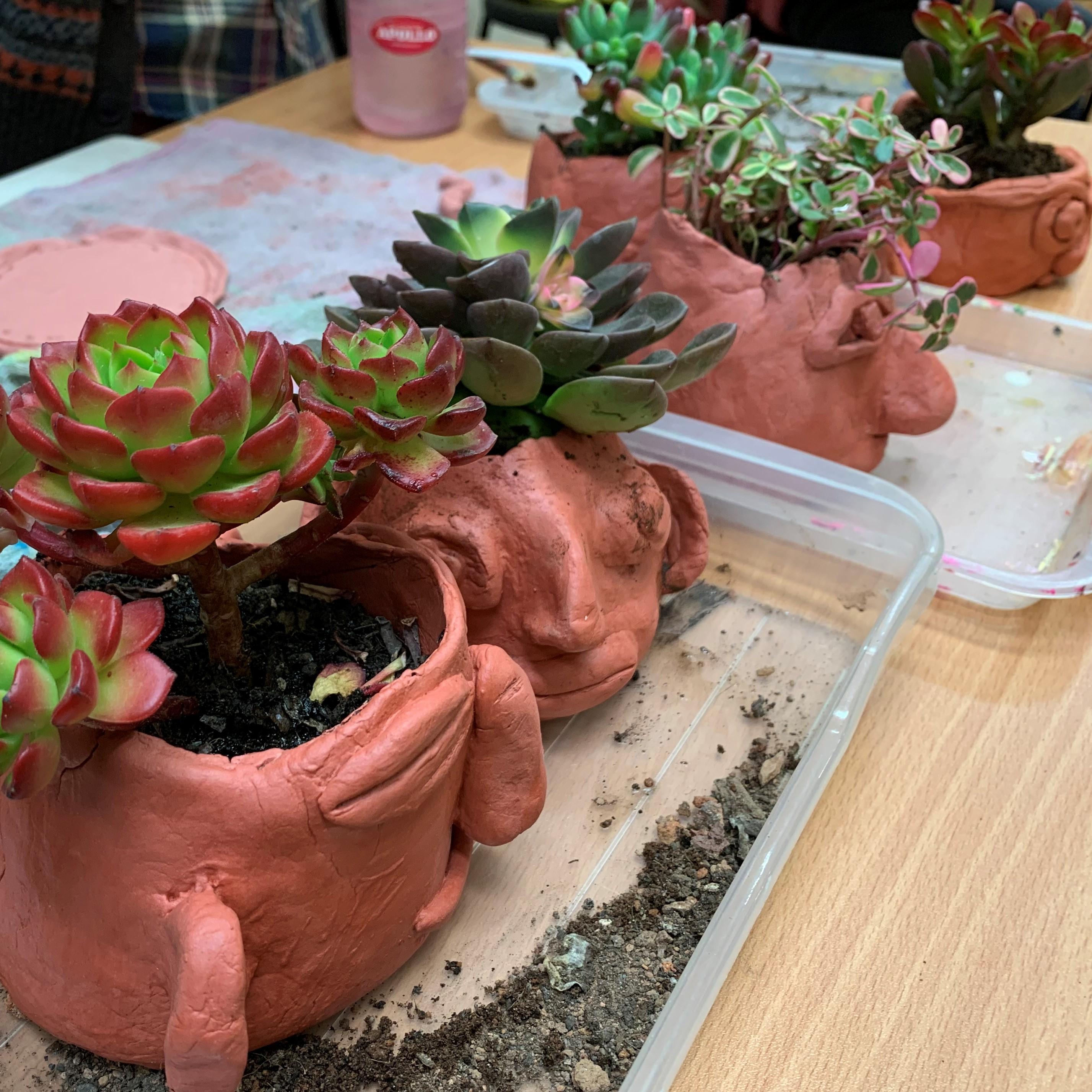 我的陶瓷盆栽