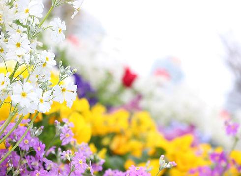 multicolored%2520flowers%2520in%2520bloom_edited_edited.jpg