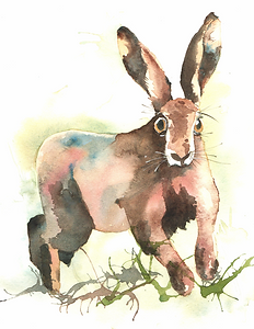 running hare3.png
