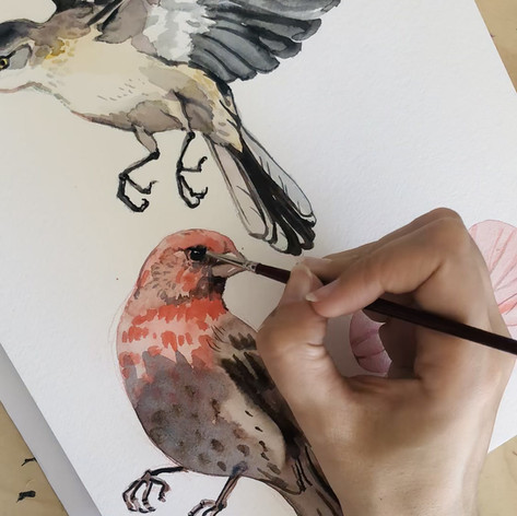 Bird timelapse