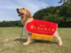 一心警察犬訓練所