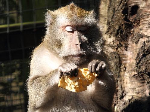 Crab Eating Macaques (Digital, 1 Year)