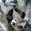 Thumbnail: Ring Tailed Lemurs Family (Postal, 1 Year)