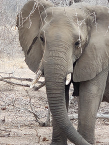 South Africa - Crimson World Travel_1027