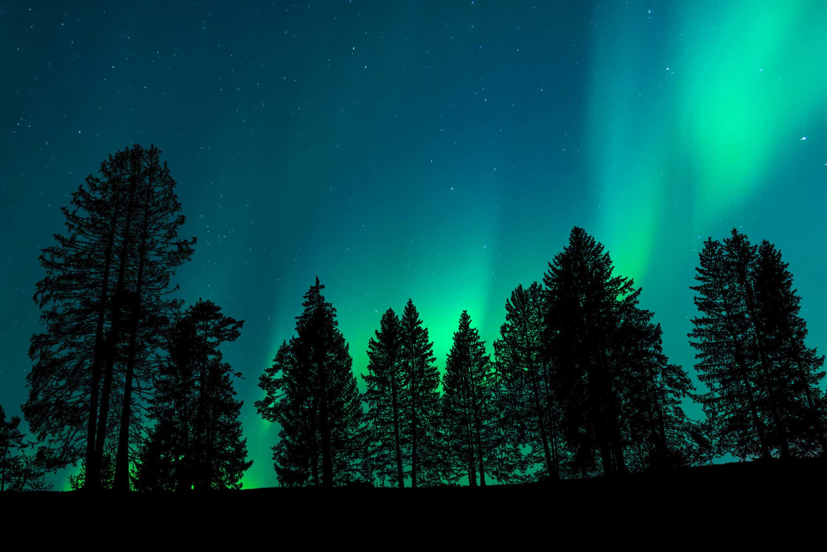 freepik-view-forest-with-night-sky.jpg