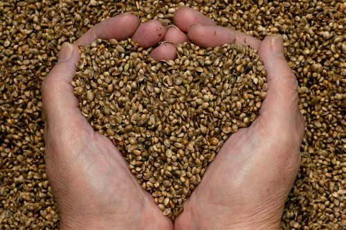 A pair of hands scooping up a pile of Hemp Seeds from a larger pile.