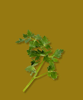 TheNativeCo_ProductImages-Parsley2.jpg