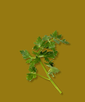TheNativeCo_ProductImages-Parsley1.jpg