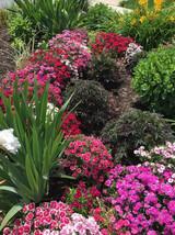Gardens at Faranda's