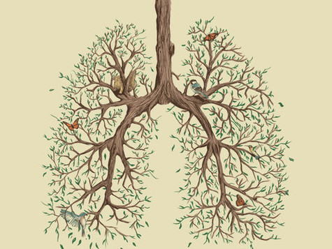 Autumn and the Lungs: Guest Post