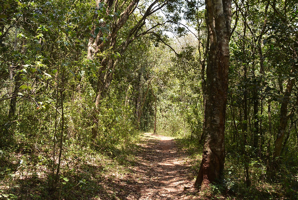 Ngong Road Forest.JPG